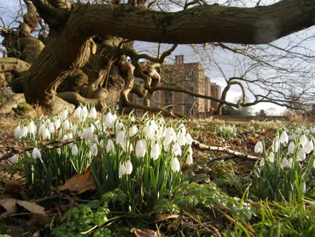 Doddington Hall is a gorgeous backdrop to this Snowdrop Walk