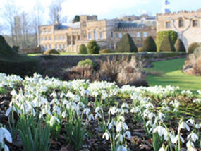 The delicate white flowers at Forde Abbey