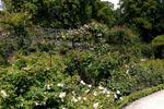 The beautiful Alnwick Garden