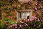 Typical English country garden at Coton Manor