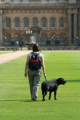 Grimsthorpe dog blog