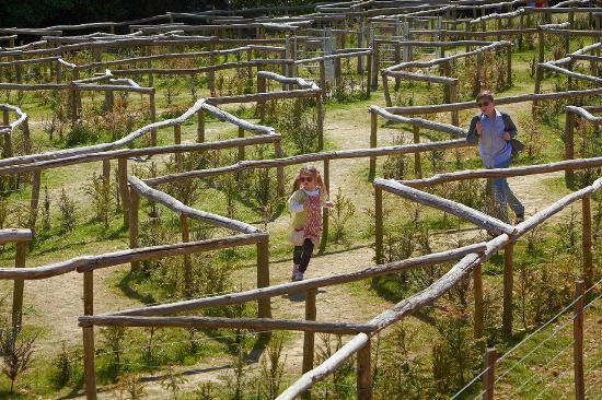 Riverhill Himalayan Gardens - maze