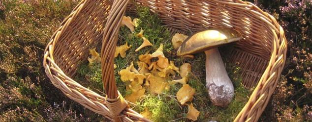 mushrooms-cawdor-castle